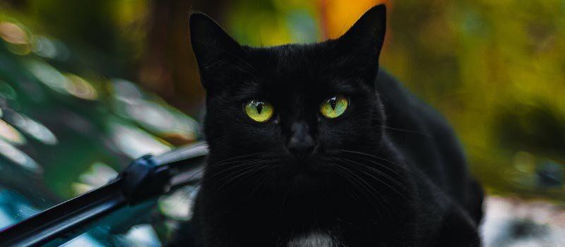 七匹の黒猫の冒険